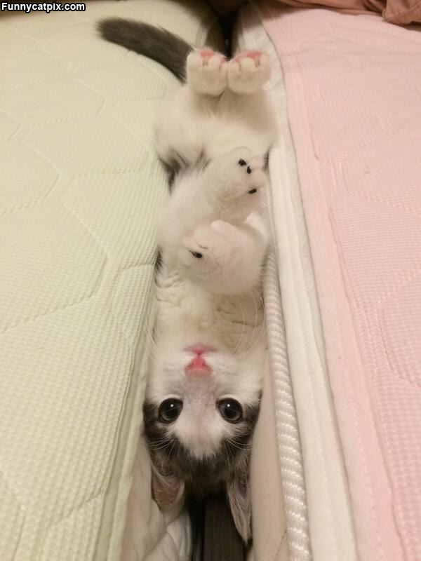 Hanging Out Like This