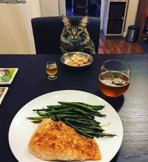 Having A Fancy Dinner