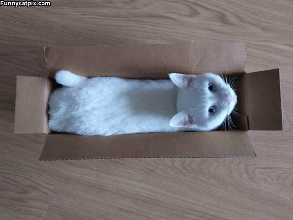 Having Fun In A Box