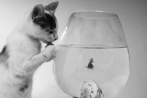 Hello Fishy