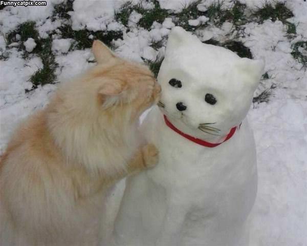 Hello Snow Cat