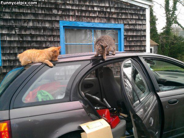 Helping Unload The Car