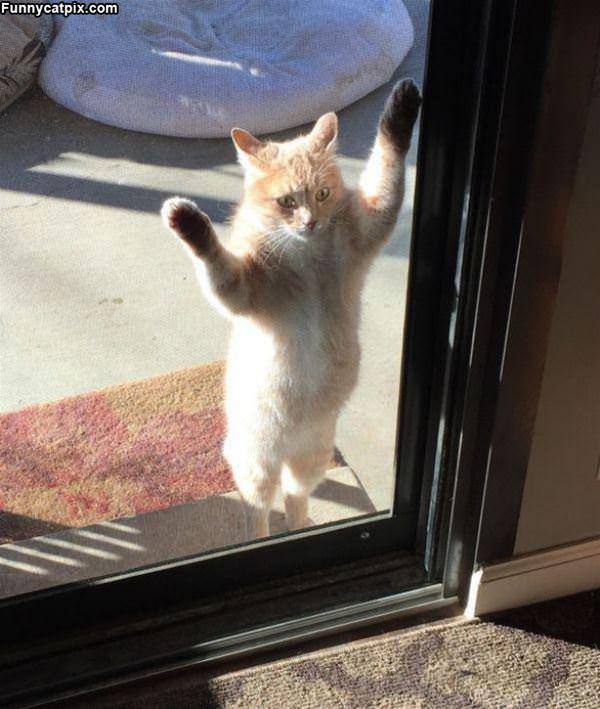 Hey Bud Let Me In