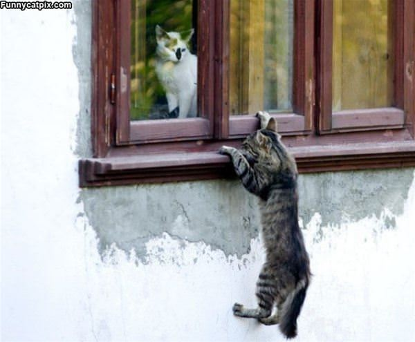 Hey Cmon Let Me In