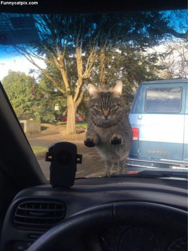 Hey Let Me In