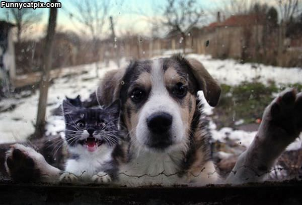 Hey Let Us In