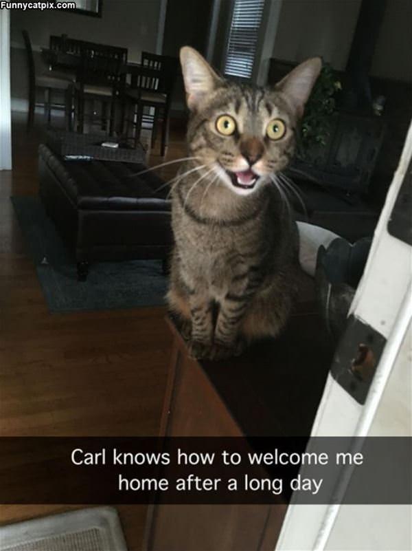 Hey Welcome Home Human