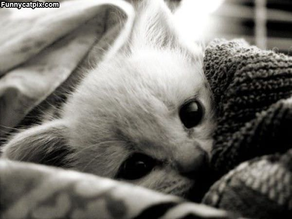 Hiding And Being Cute