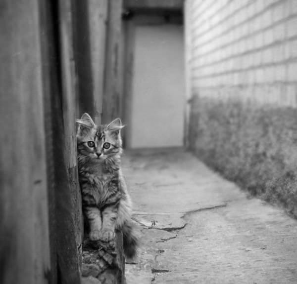 Hiding On The Wall