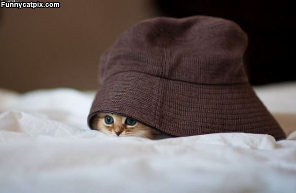Hiding Under The Hat