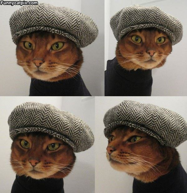 Hipster Cat Hat