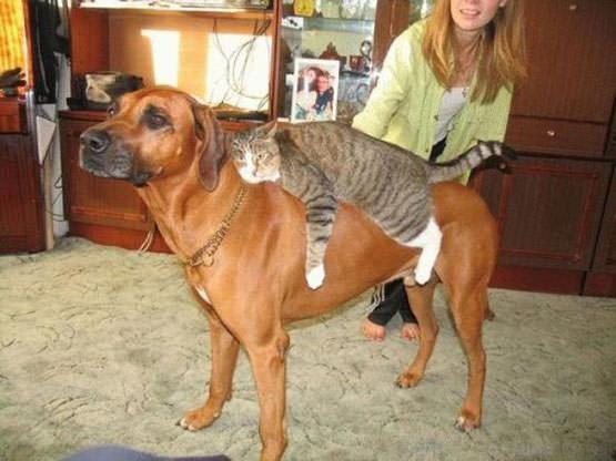 DogBack Riding