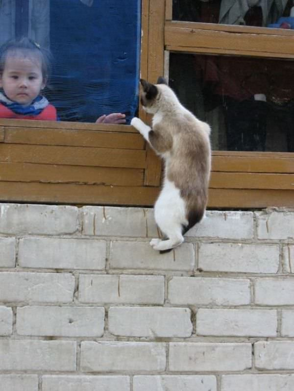 House Climbing
