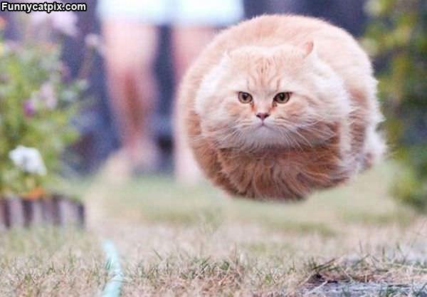 Hover_Cat859.jpg