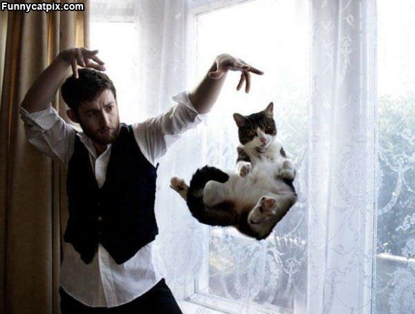 Hover Magic Cat