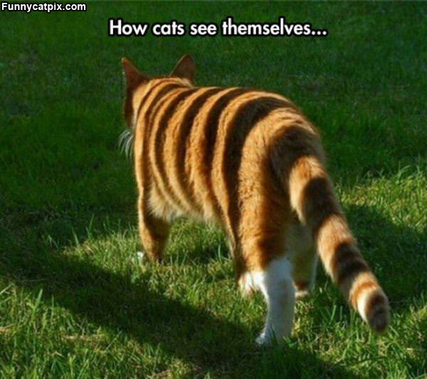 How Cats See Themselves