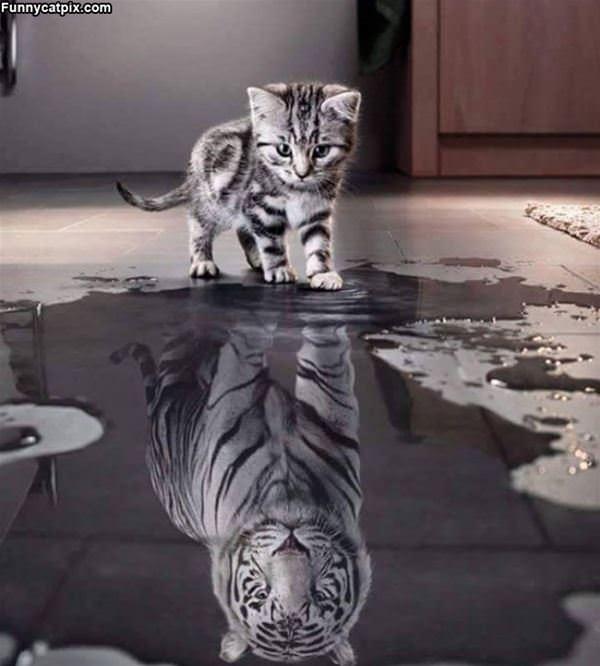 How I See Myself