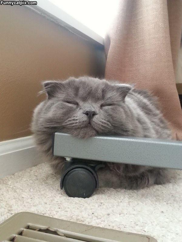 How I Sleeps