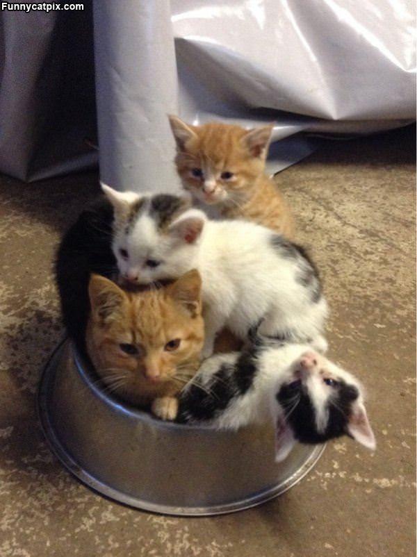 How Many Cats