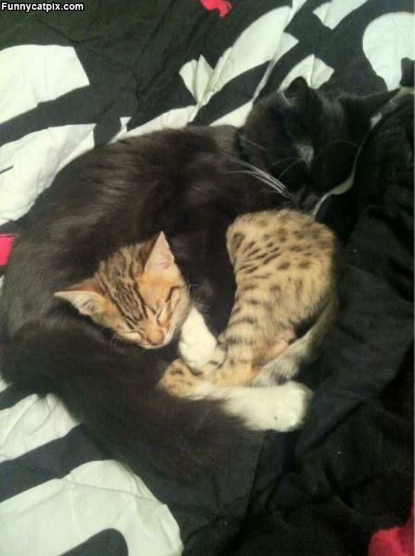 How These Cats Stay Warm