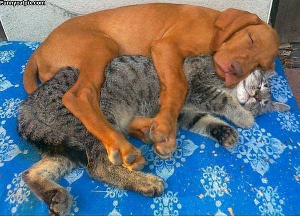 Hug Me Buddy