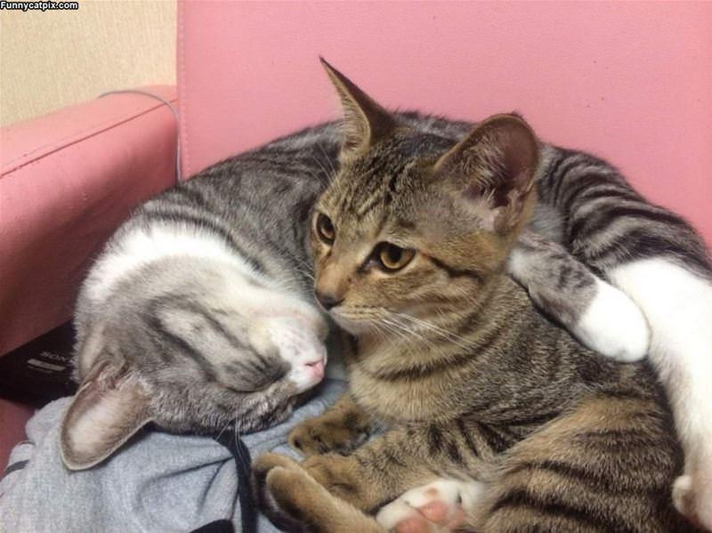 Hugging Kitties