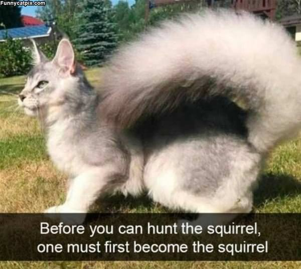 Hunting The Squirrel