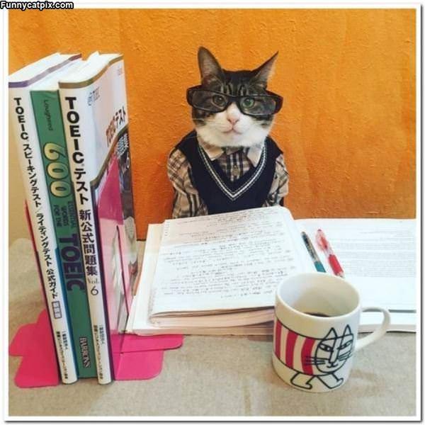 I A Smart Cat