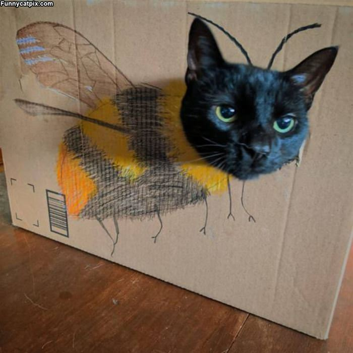 I Am A Bee Now