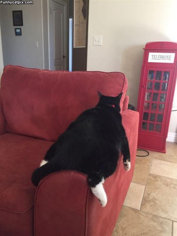 I Am A Flat Cat
