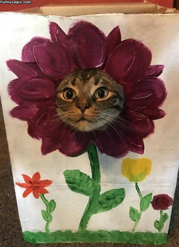 I Am A Flower Lol
