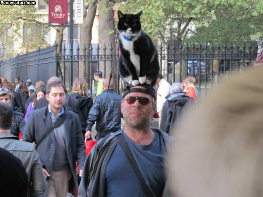 I Am A Hat Cat