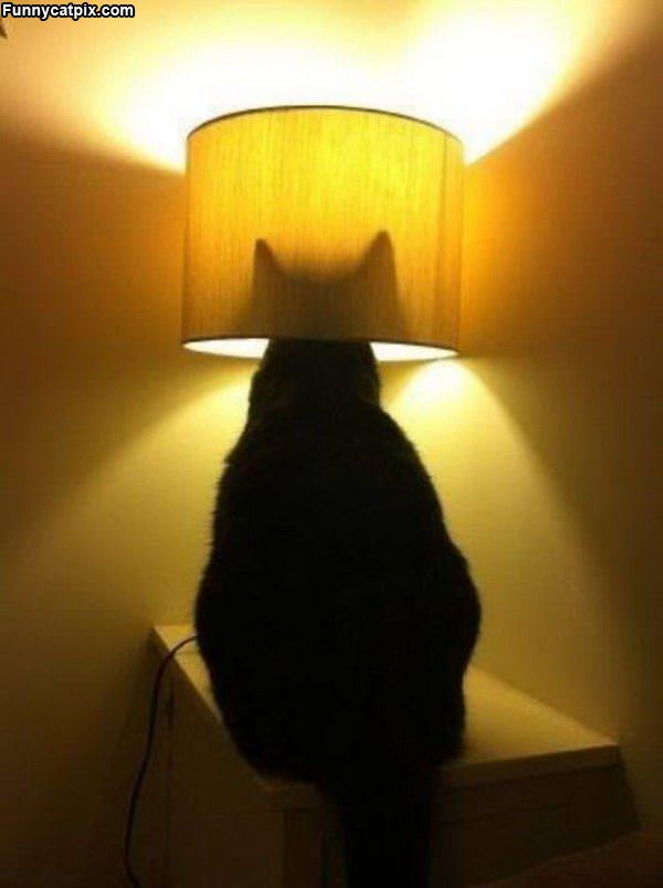 I Am A Lamp Now