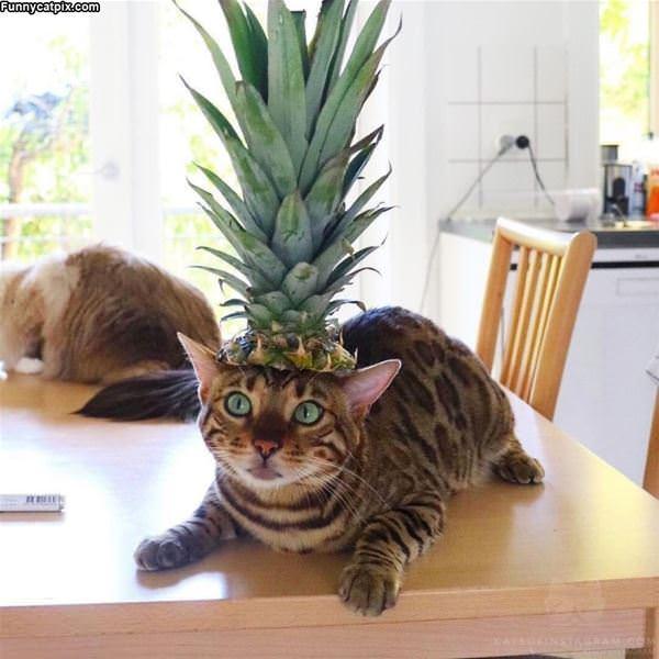 I Am A Pineapple