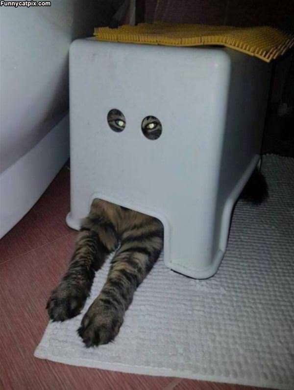 I Am A Robot Mew Mew