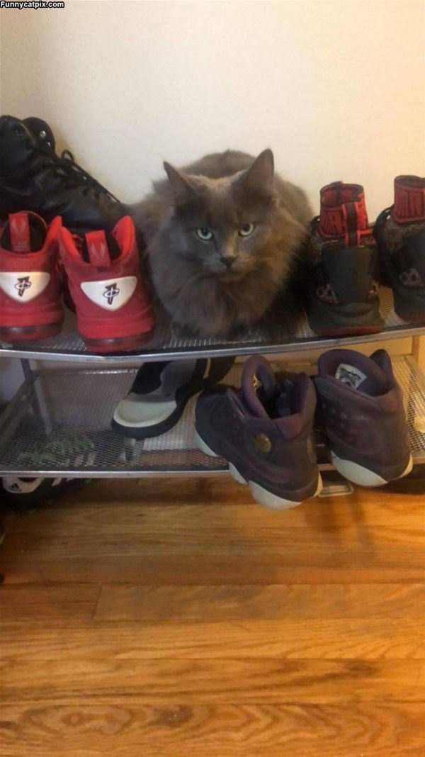 I Am A Sneaker Now