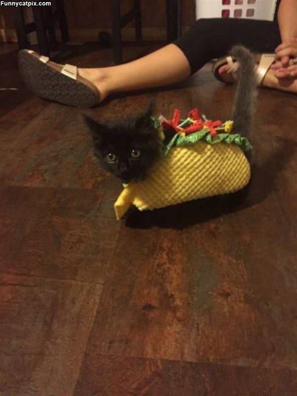 I Am A Tiny Taco