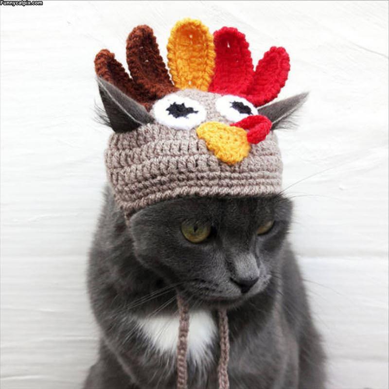 I Am A Turkey Now