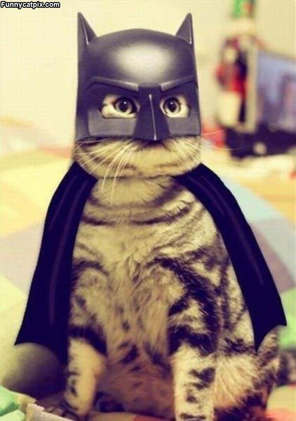 I Am Batcat