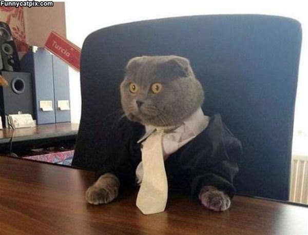 I Am Business