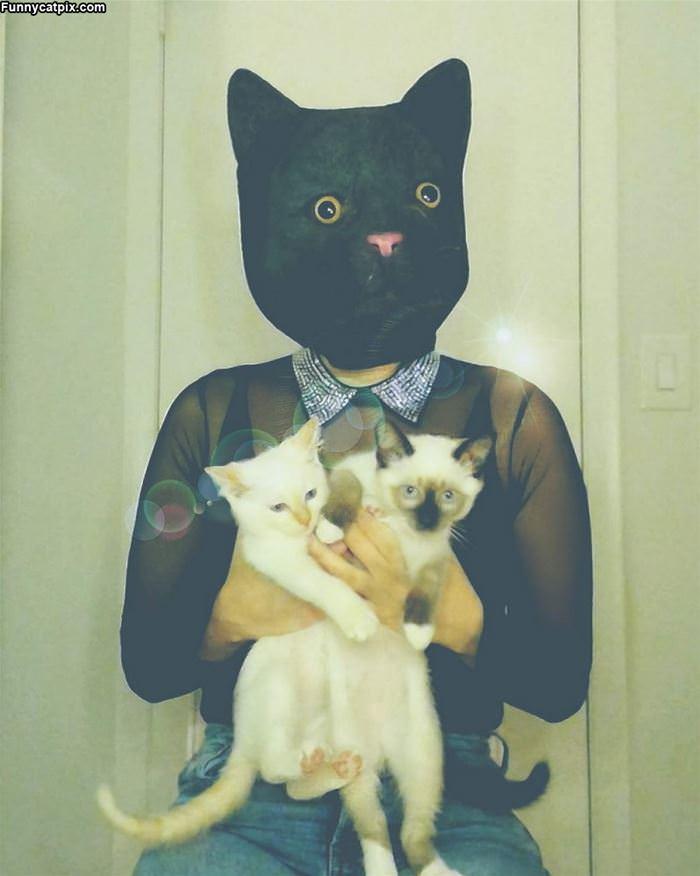 I Am Cat Man