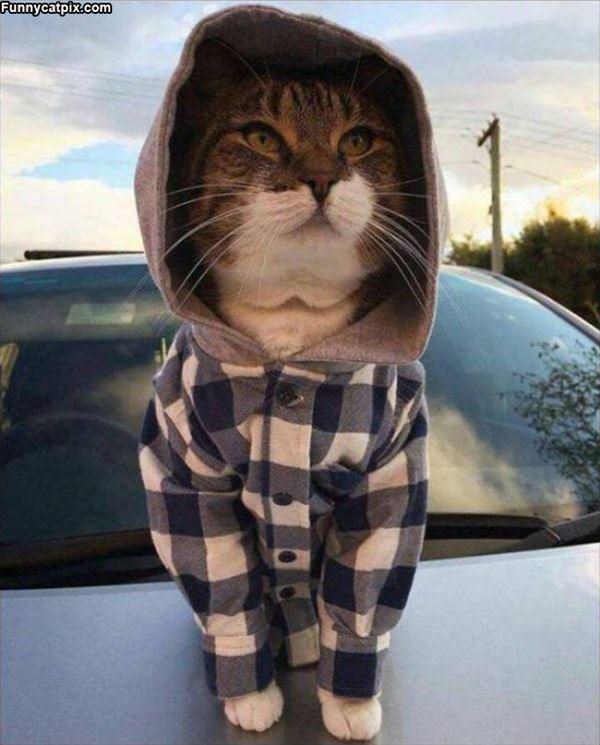 I Am Farmer Cat