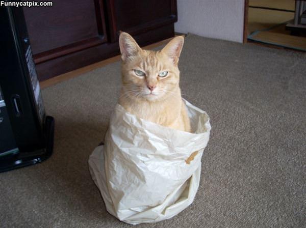 I Am In A Bag