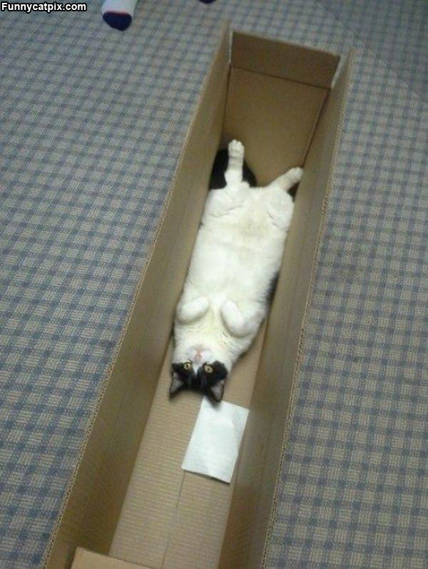 I Am In A Box