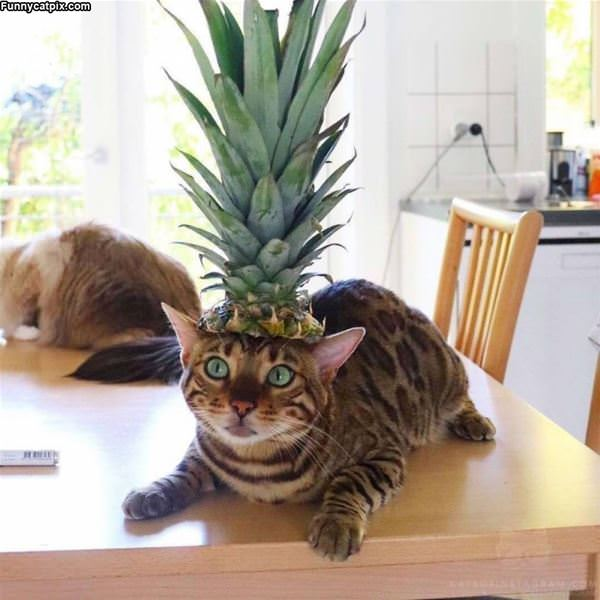 I Am Pineapple Cat
