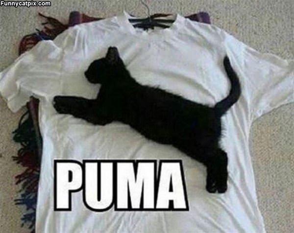 I Am Puma