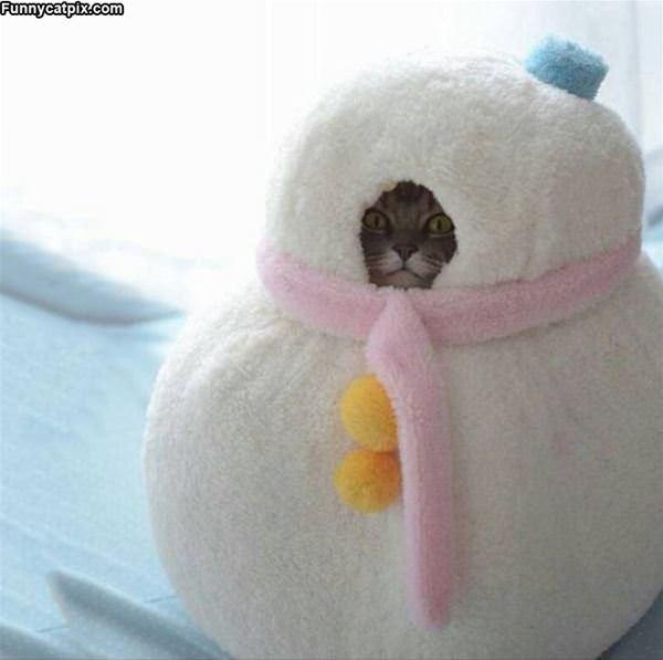 I Am Snowman Cat