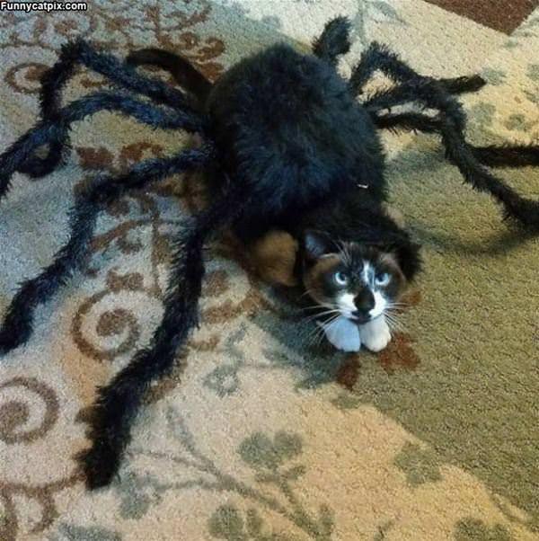 I Am Spider Cat