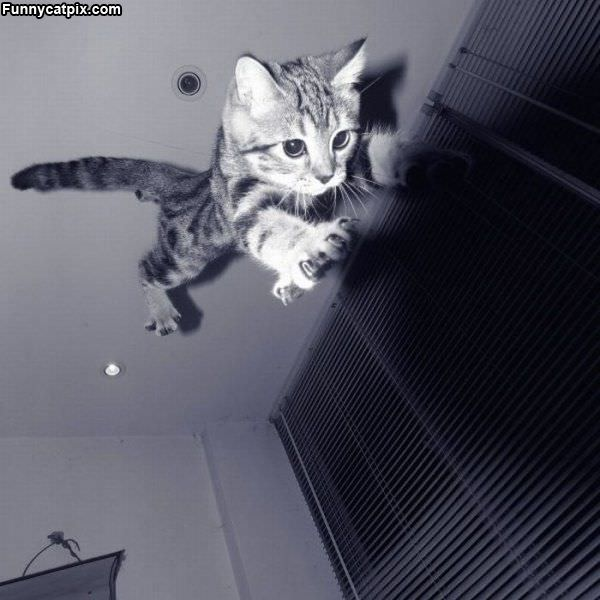 I Am Super Cat