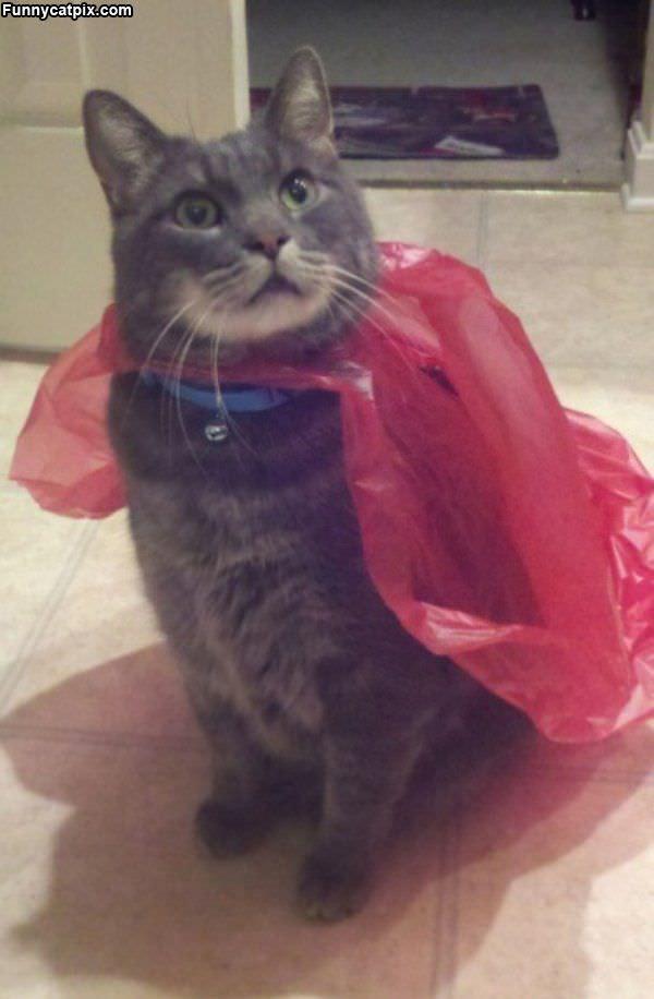I Am Supercat